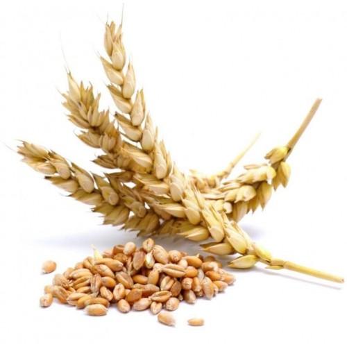 Клетчатка Зародышей пшеницы 210 г - выводит токсины